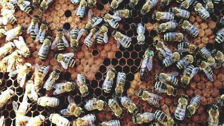 Μέλι Siris Μέλισσες & Κηρήθρες